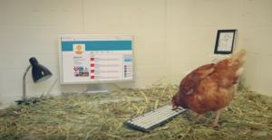 betty-the-hen-tweeting