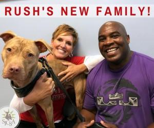 rush pit-bull