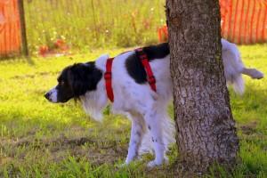 dog-1694209_1280