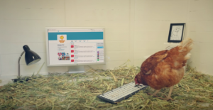 betty-the-hen-tweeting
