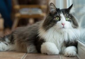 tenant pet owners