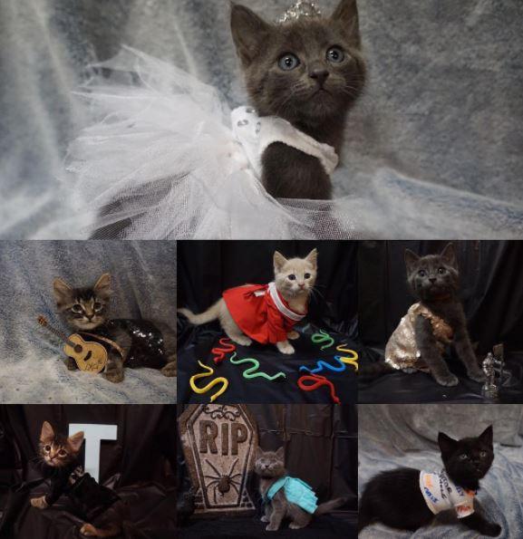 Kittty costumes